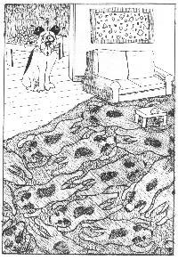 Dog Carpet